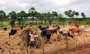 Fazenda Raposa em Maracanaú